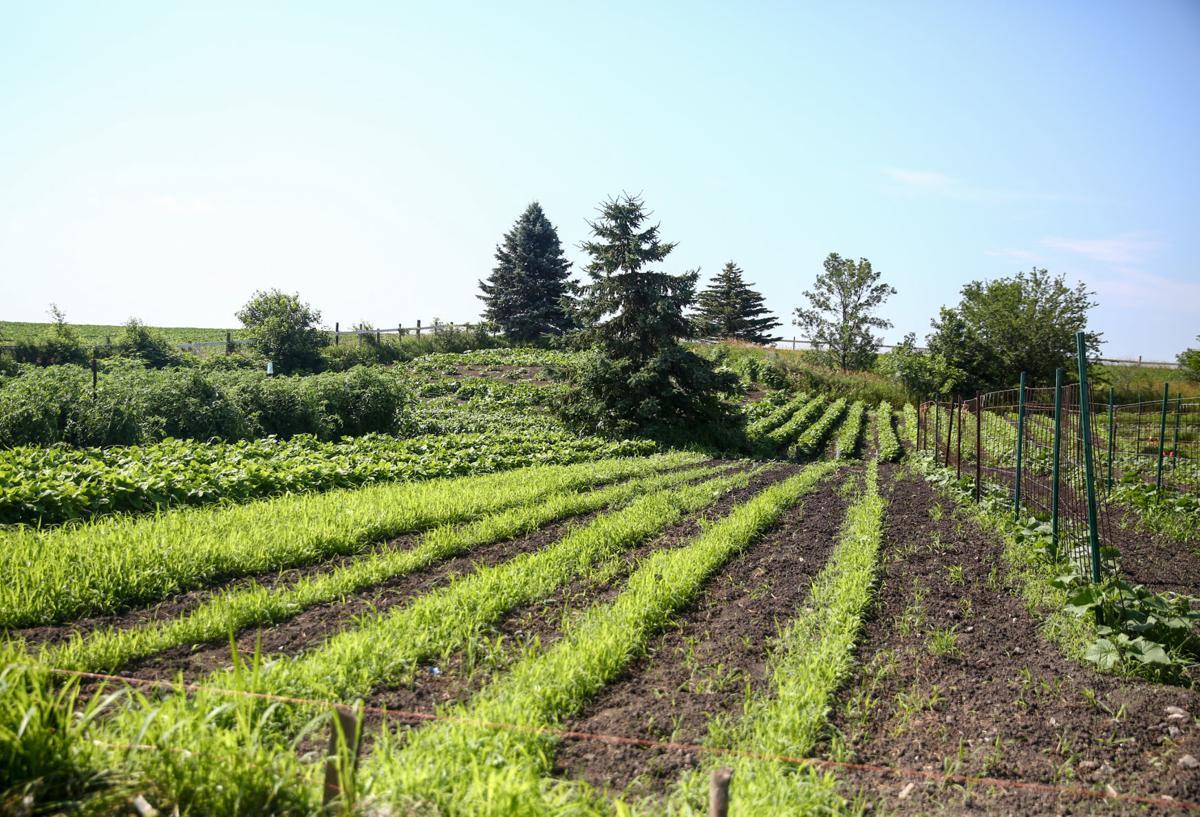 D.A.N.'s Garden Produce