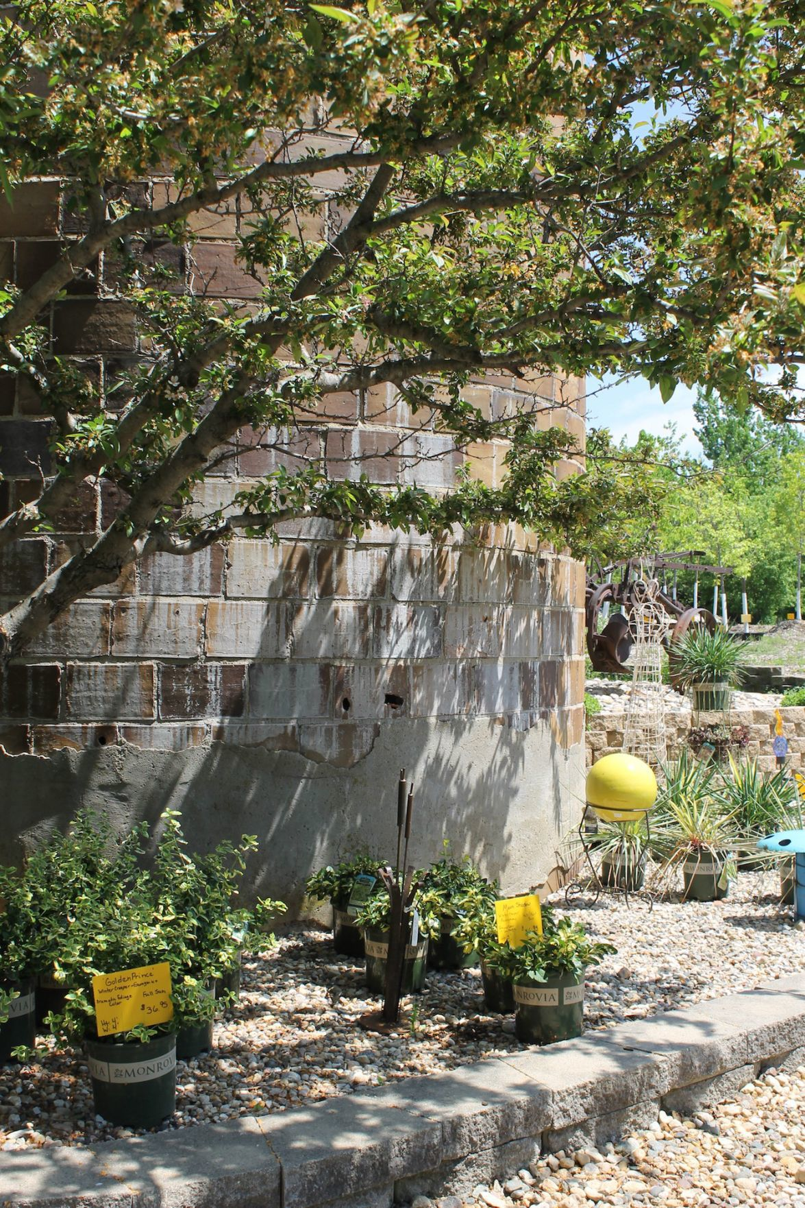 In Business Clear Lake Nursery Enters 41st Year Of Growing