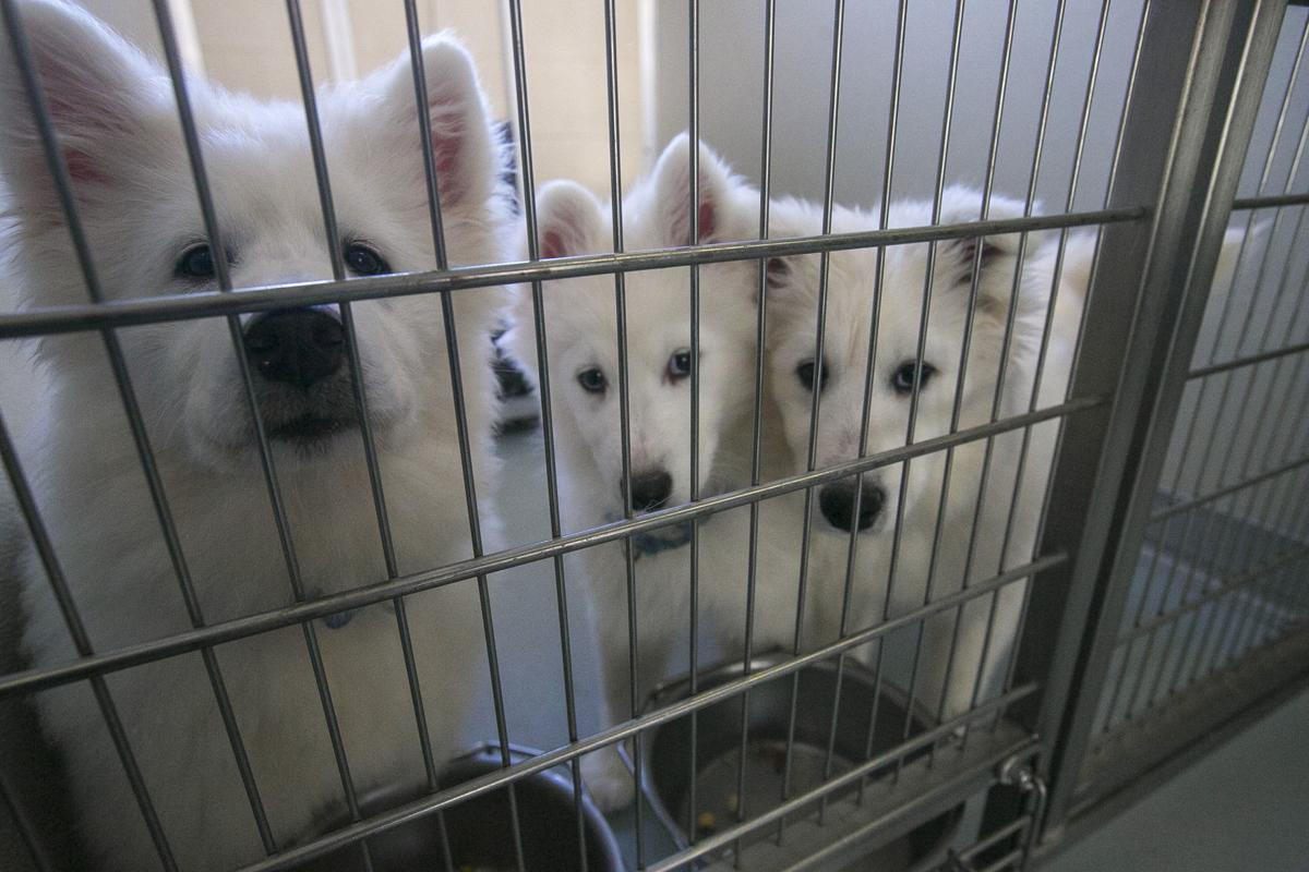 Lawmakers look to strengthen state animal cruelty laws after