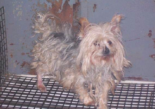 Photos: 10 Iowa puppy mills on Humane Society watch list for