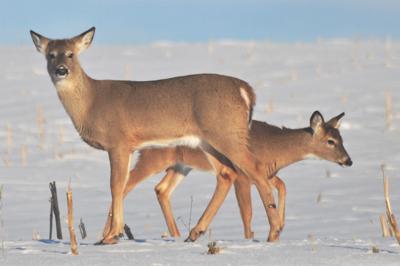 Washburn Outdoors: Warm winter puts brakes on late deer season