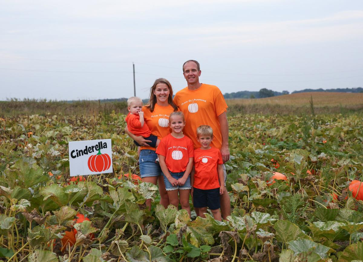 Plain Ol' Pumpkins - 1