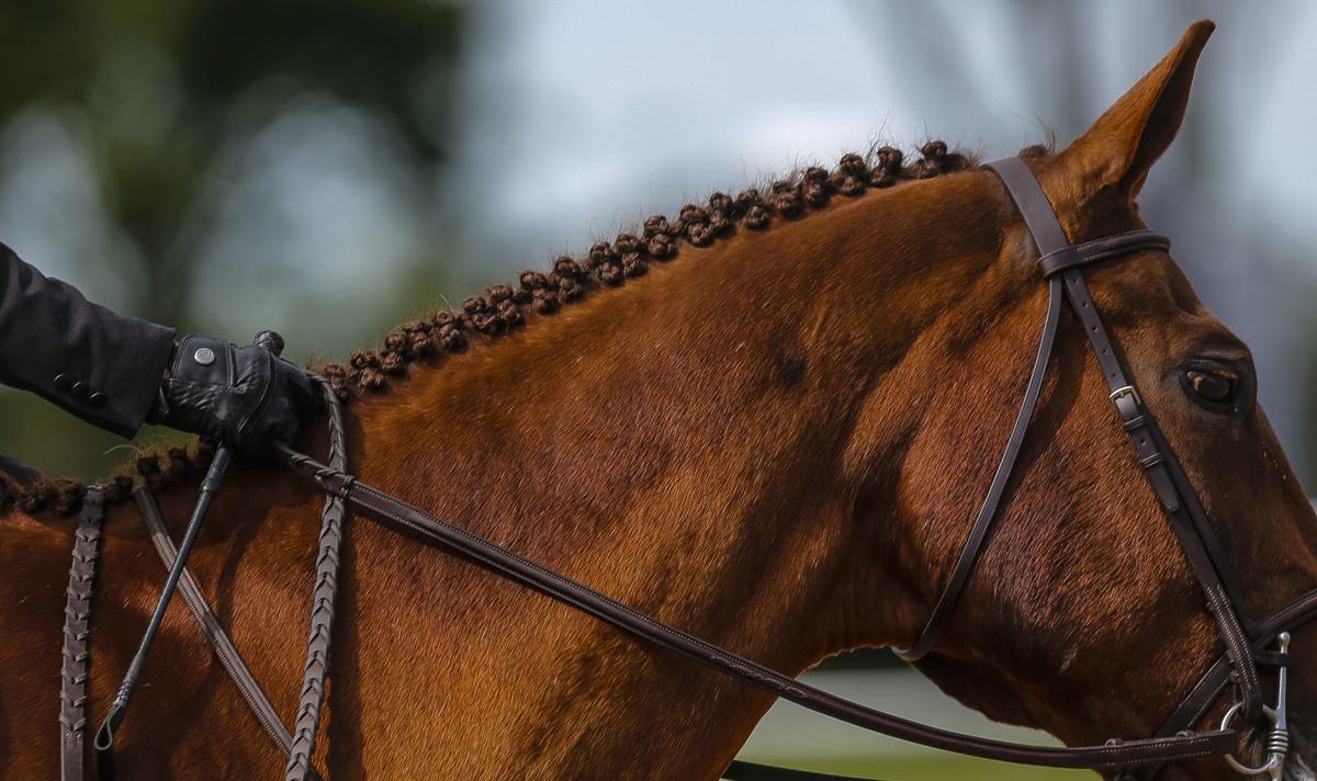 Midstates Horse Show 7