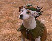 Wishbone dog (Soccer)