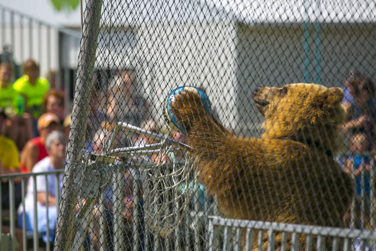 Floyd County Bear Show