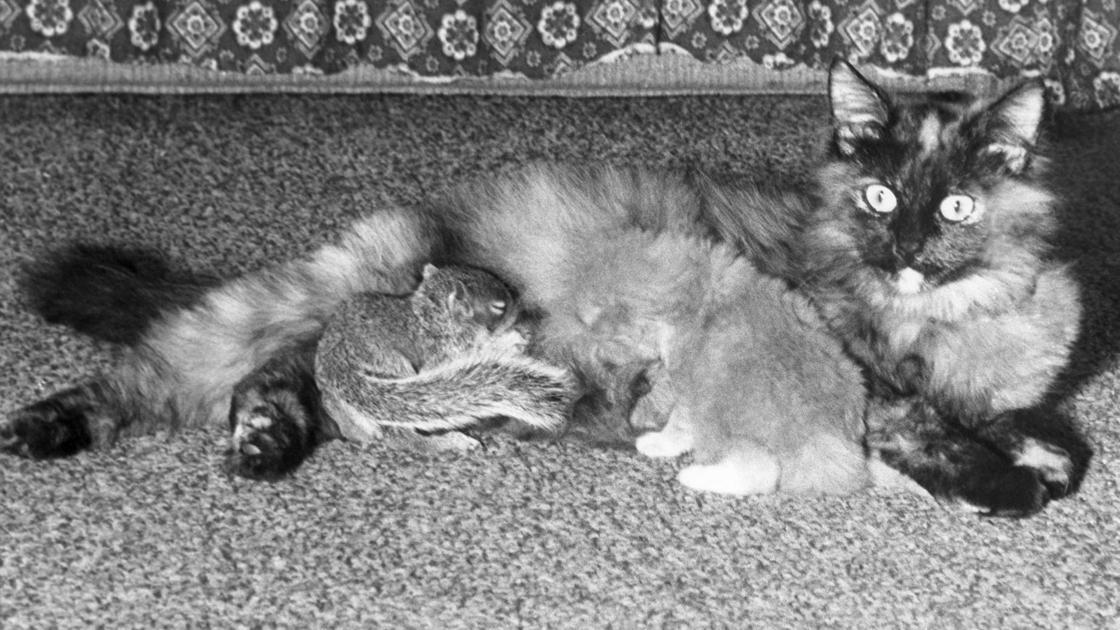 35 photos of unlikely animal friendships pets globegazette spiritdancerdesigns Images