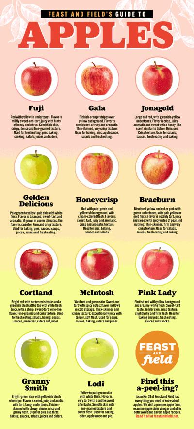 Apple guide