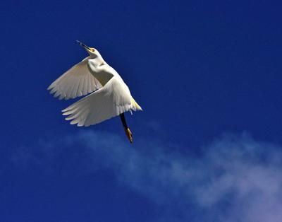 'Aerial Ballet'