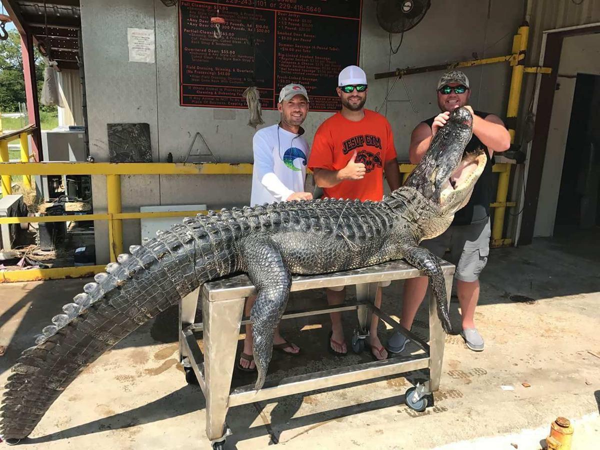 Gator fishing 2