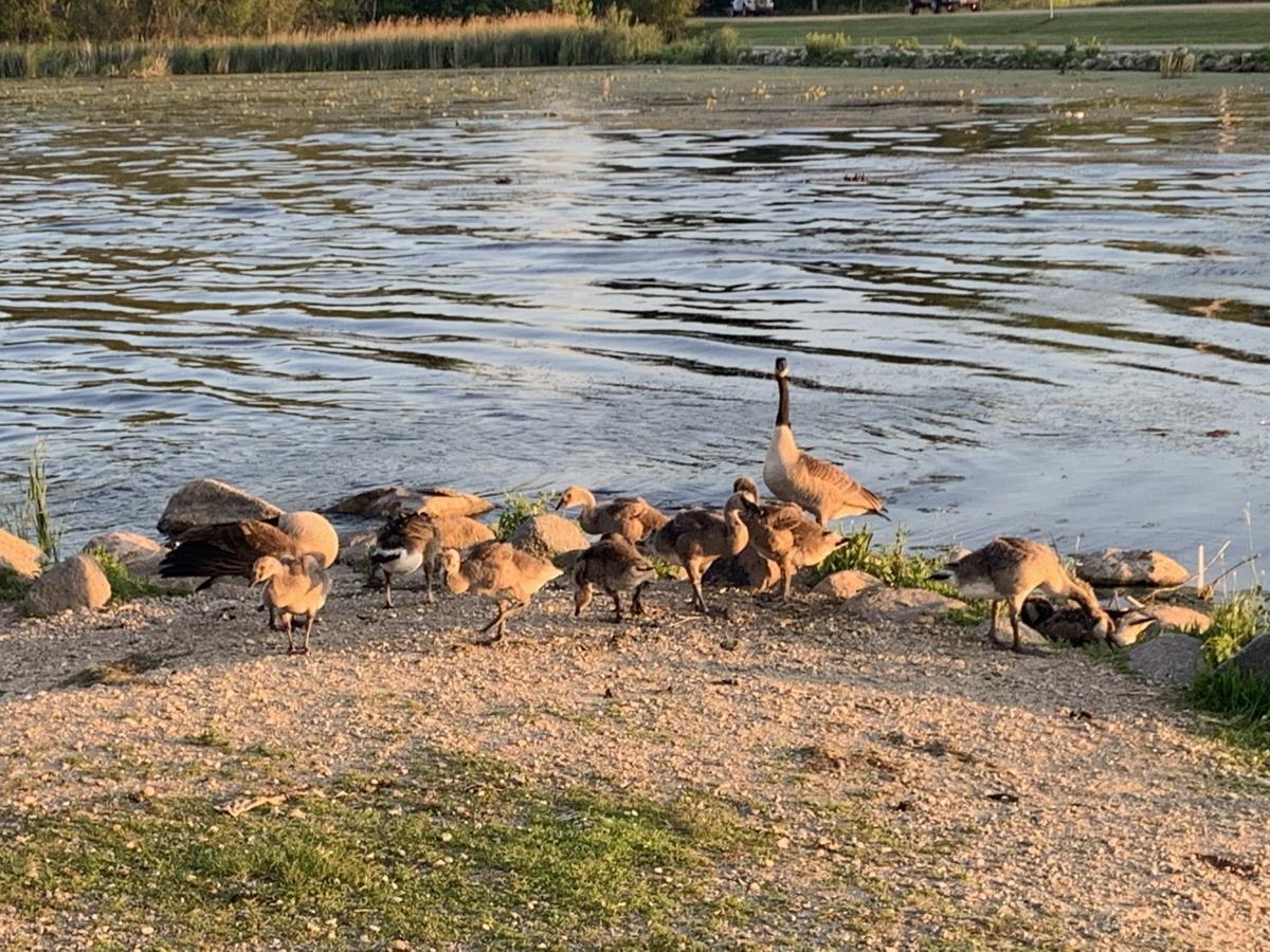 Maddie's family
