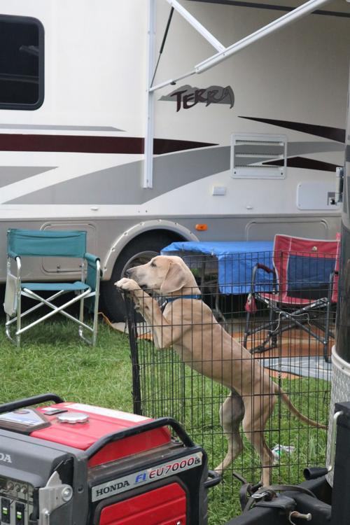 Fenced dog.JPG