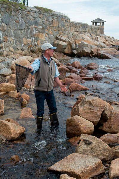 FishOn: Count finds more elvers visiting Rockport