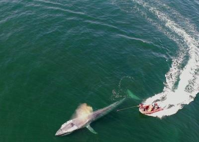 California's Dana Point named first Whale Heritage Site in the nation