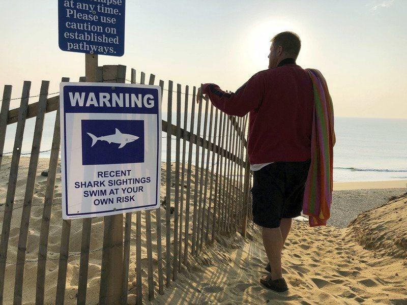 New study to examine feeding habits of Cape Cod great whites