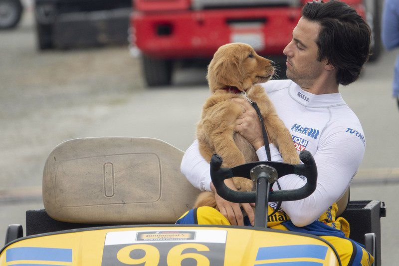 Review: Dog's POV can't carry 'Art of Racing in the Rain'