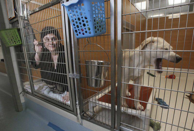 Living like shelter pets