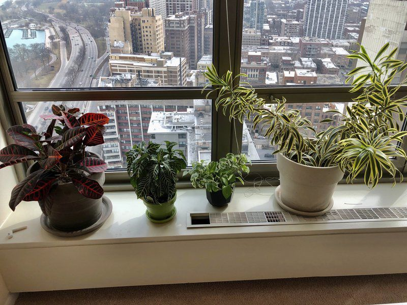 One leaf at a time: Houseplants help bring joy indoors to troubled souls