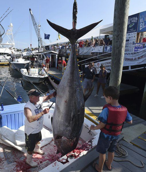 As bluefin recover, a new fight about how to fish for them