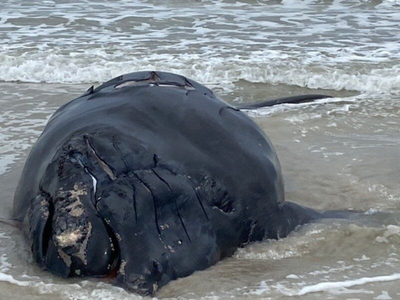 Rules planned to save right whales loom over lobstermen