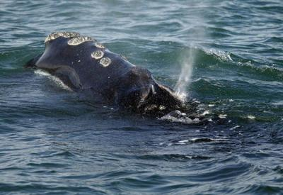 FishOn: Of summer, smuggling and bogus SOS calls