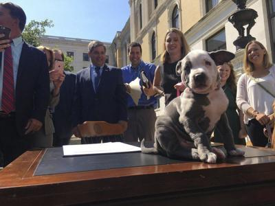 Advocates seek homes for research dogs and cats