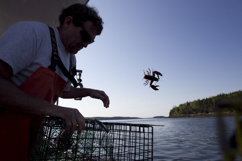 Slow lobster season so far in Maine, but price is steady