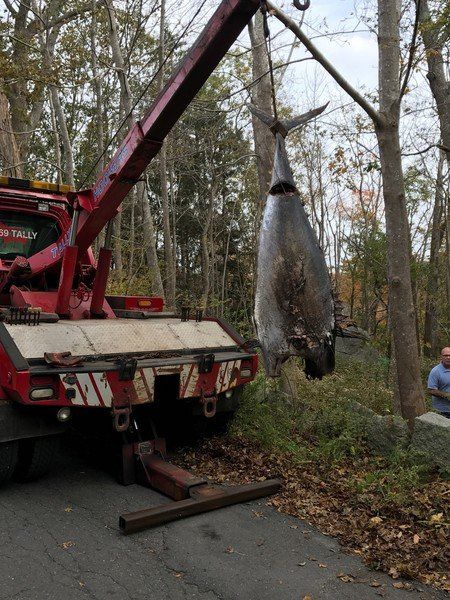 Tally's hauls big tuna from the woods