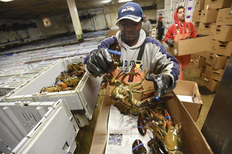 Lobster dealers feel pinch in tariff trade wars