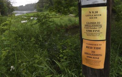 Red tide shutsdown shellfish harvesting