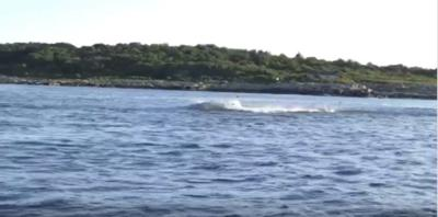 Viral whale video: Likely not an orca, but still cool