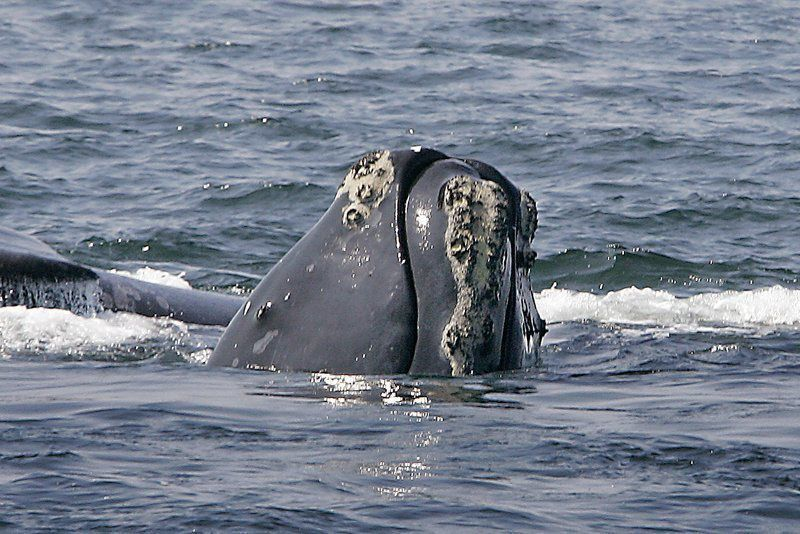 FishOn: Navy to limit sonar to protect whales