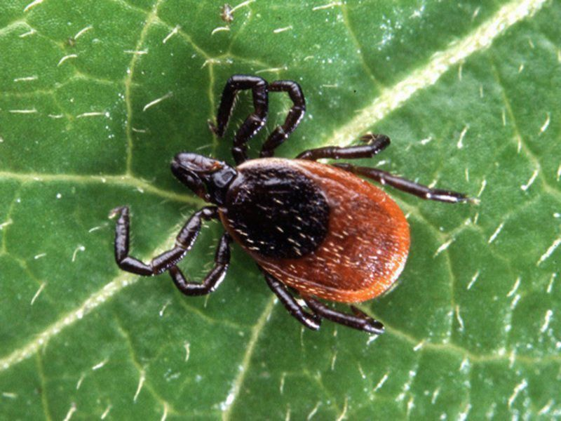 Tick season is coming, and it's likely to be bad