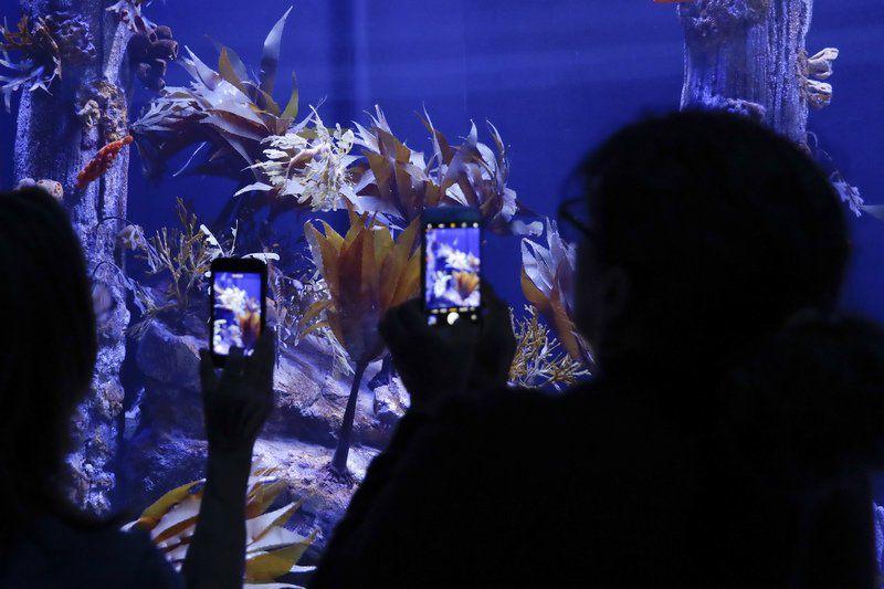 Sea dragons captivate visitors at California aquarium