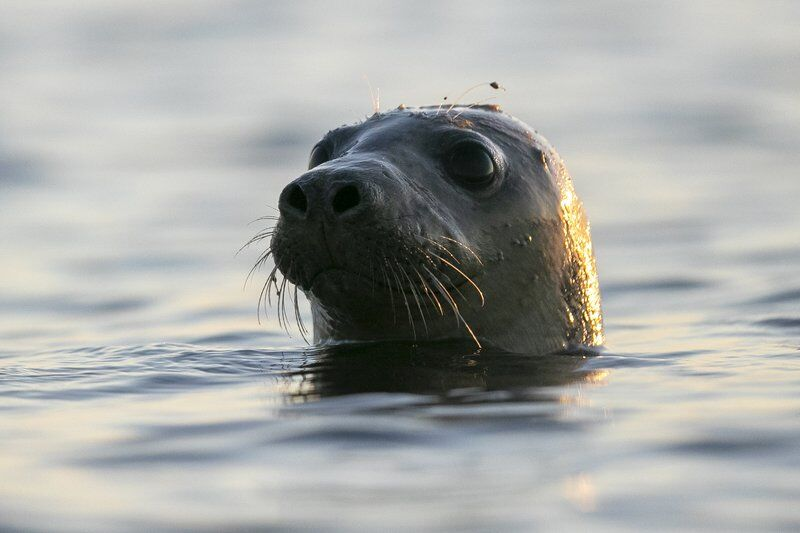 More seals means learning to live with sharks in New England