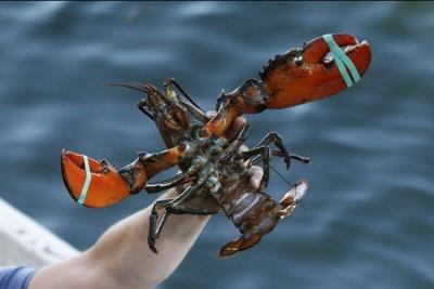 U.S. trade investigation to study lobster tariffs