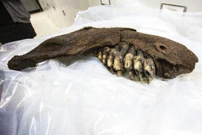 Prehistoric find