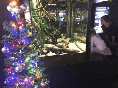 Shop's gift to feed aquarium critters for 7 months