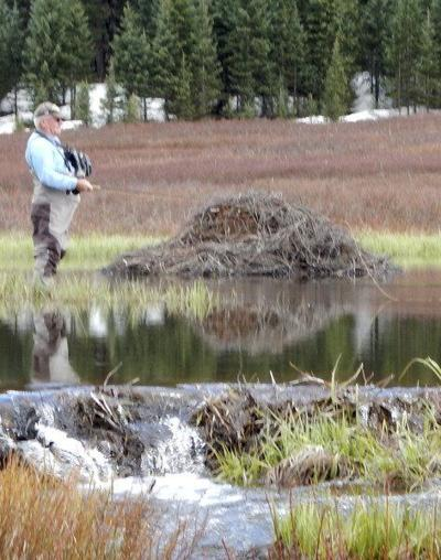 Outdoors: Beaver dams have many benefits to ecosystem
