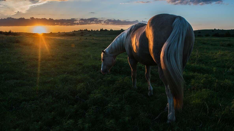 rowse horse sunset2017_2-2.jpg