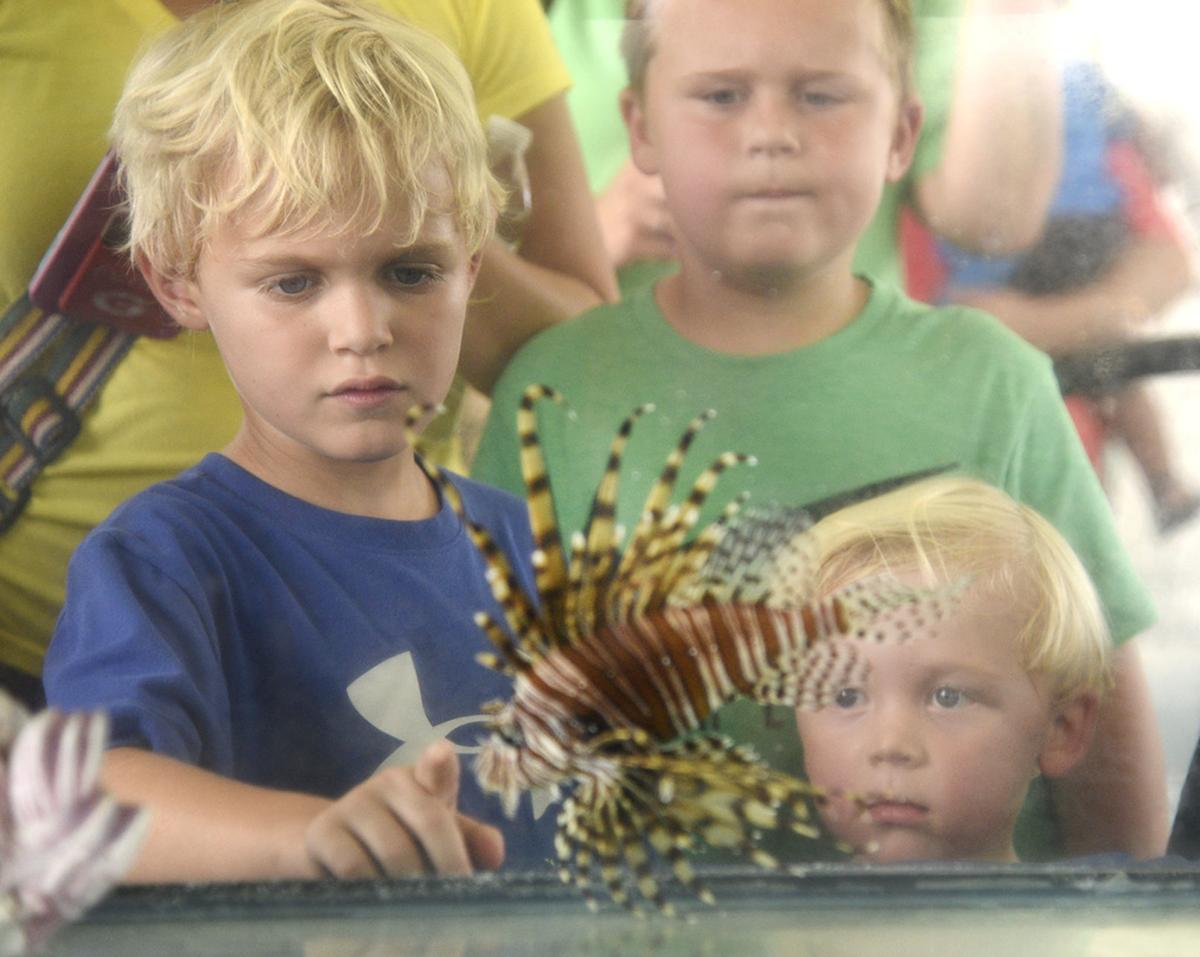 CoastFest-Young festival-goers check out a lionfish, an invasive species..jpg