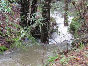 Creeks are important drinking water resource in the San Lorenzo Valley