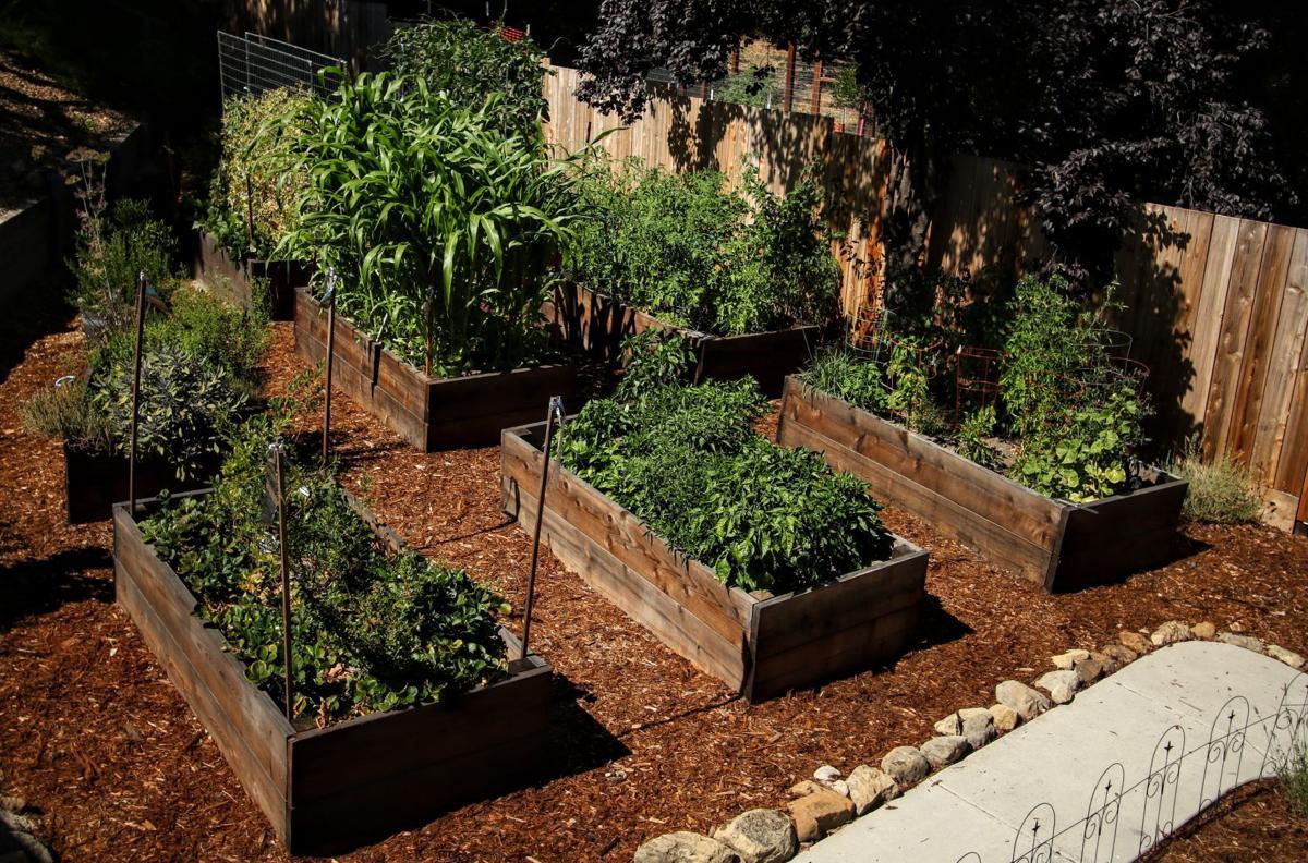 Growing Great Vegetables - Part 2 | Press Banner ...