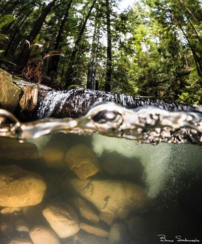 SLV Water District Board Approves Upper Zayante Creek Restoration Project