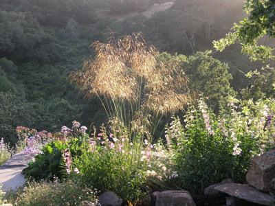 Beautiful grasses in time for fall