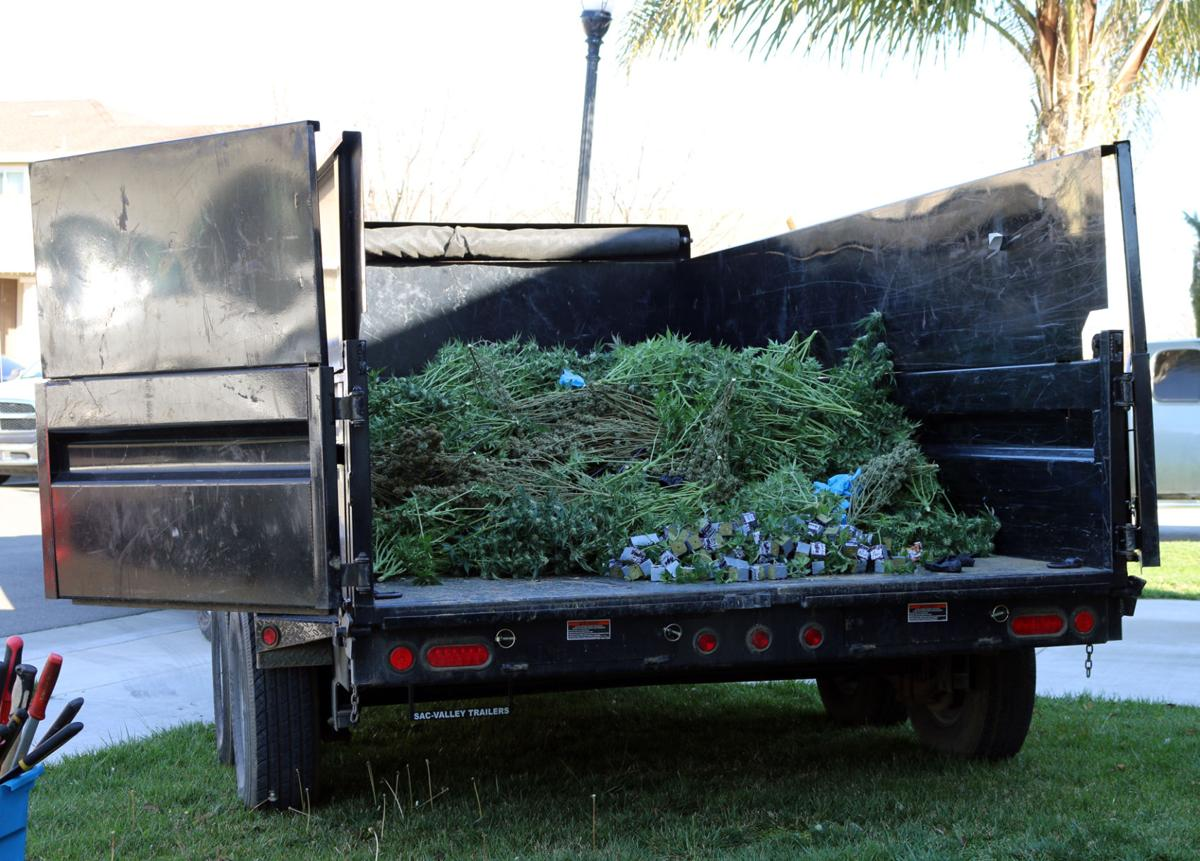 3 stops, 3 arrests and 2,777 pot plants | Patterson Irrigator News