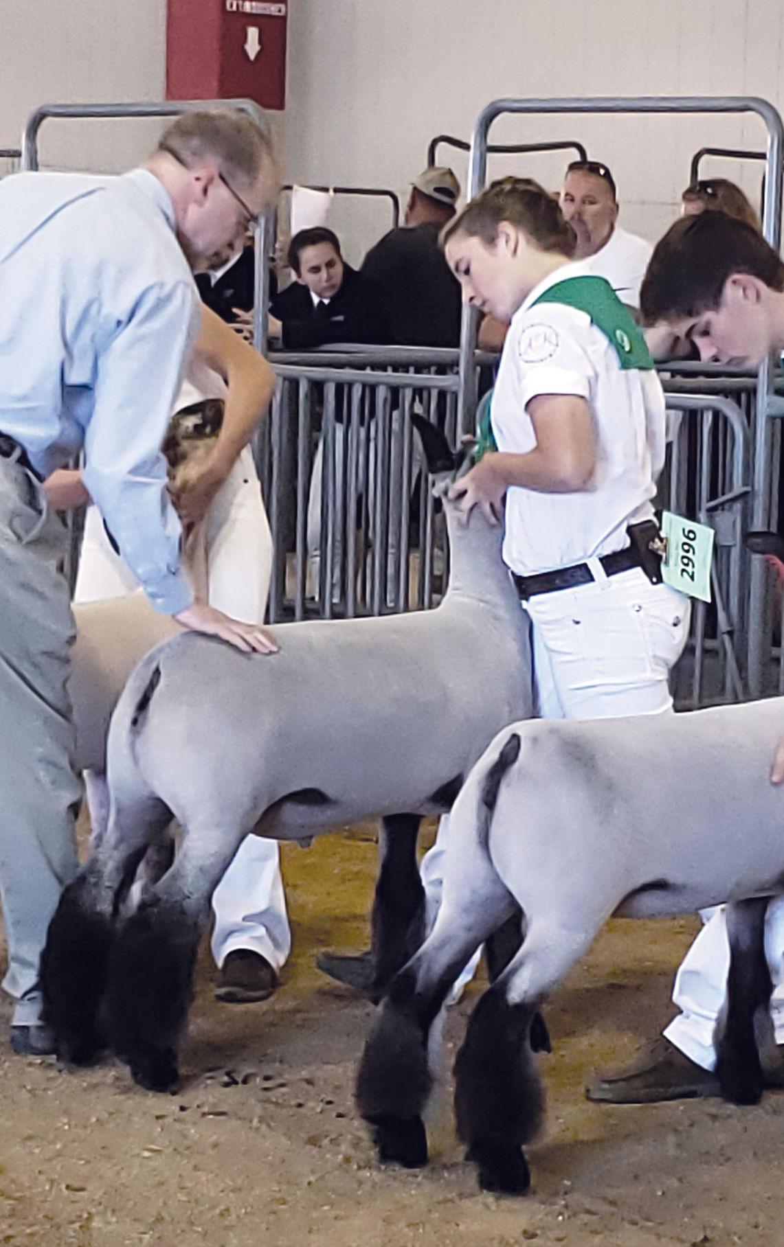 Livestock competition