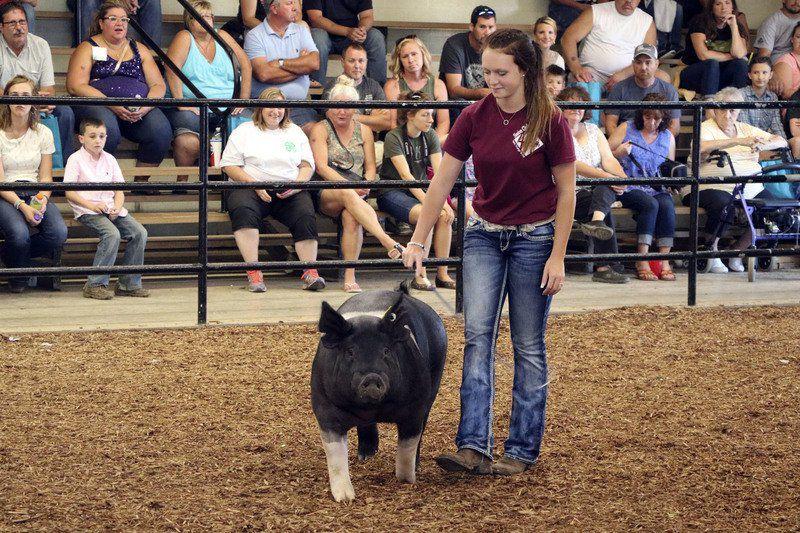 Sisters receive top swine awards at 4-H fair   Local News