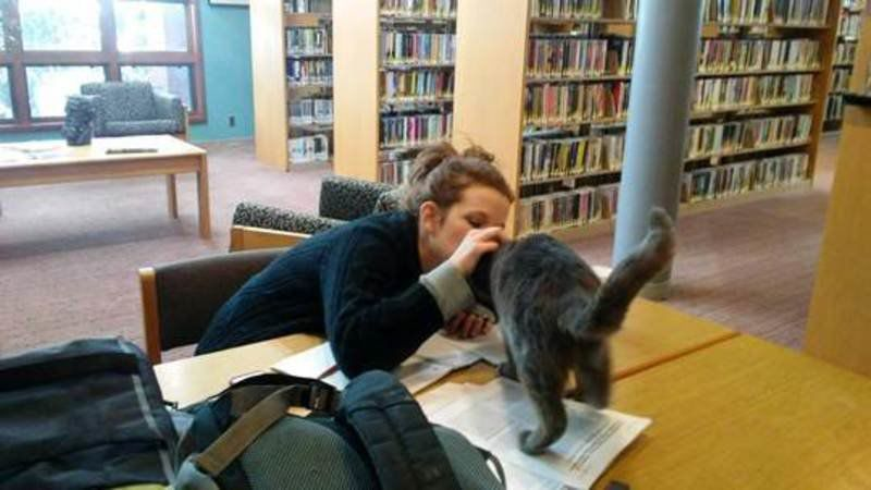HELPING HANDS (UH, PAWS): Library cat helps readers feel like family