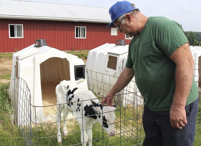 Dairy farms impacted by milk market