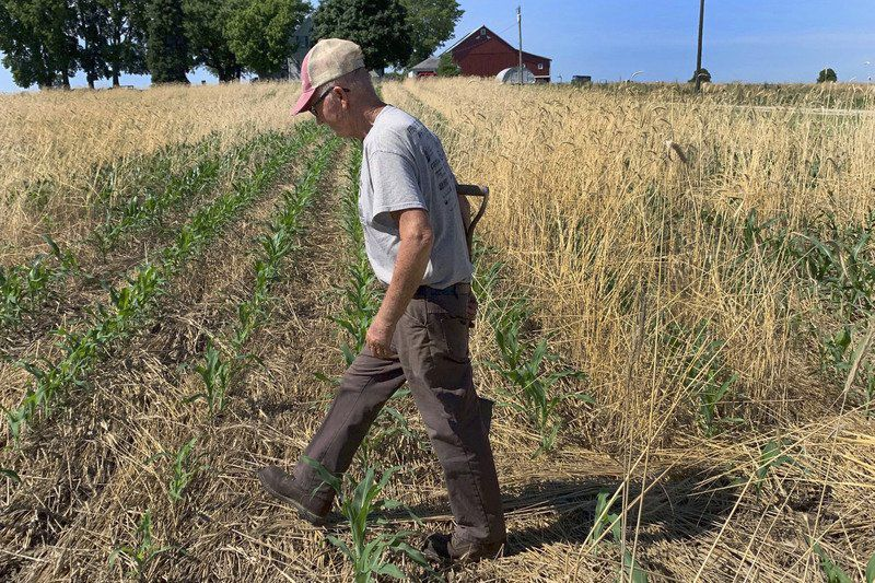 Use of cover crops soars statewide, locally